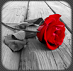 logo_photo art