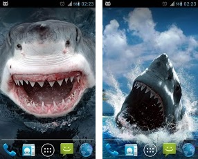misc_magic touch shark2